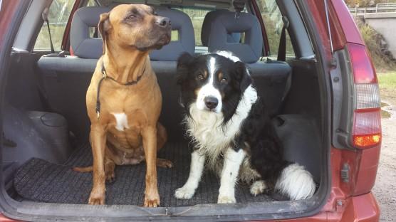 Glade hunder